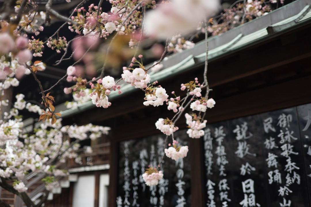 Japanese Garden Design Diploma | Courses | Suzy Chiazzari ...